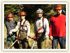 Four forestry workers